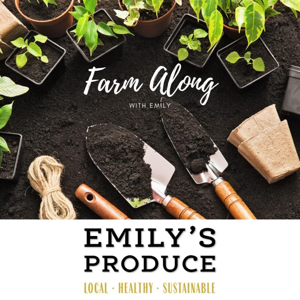 Farm Along with Emily @ Emily's Produce