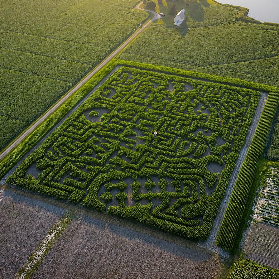 5 Acre Farmers Feed Families Corn Maze OPEN @ Emily's Produce